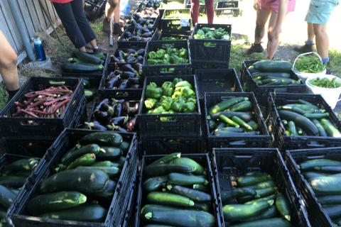 Boxes of vegetables from the Harvest of Hope garden